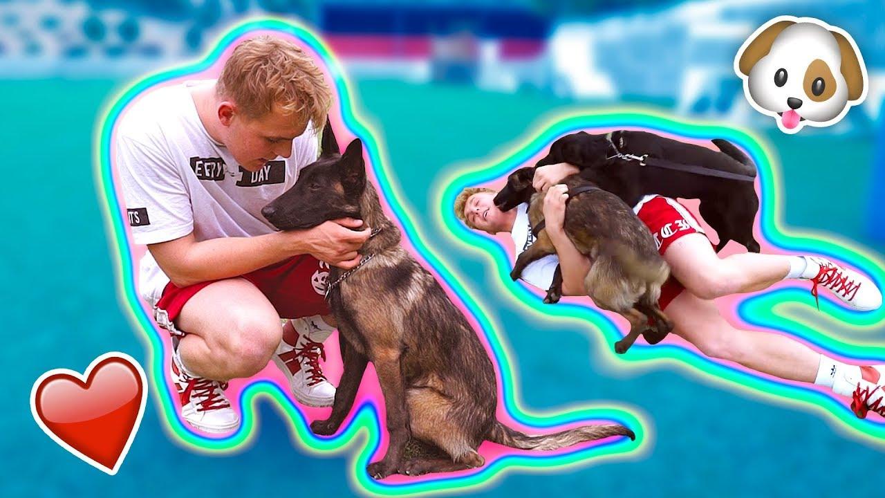 Jake Paul dog Apollo is finally back? - Stunmore